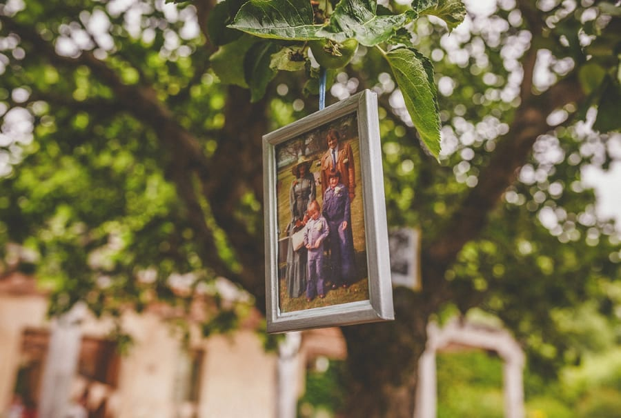 A photograph hangs from a branch on the tree
