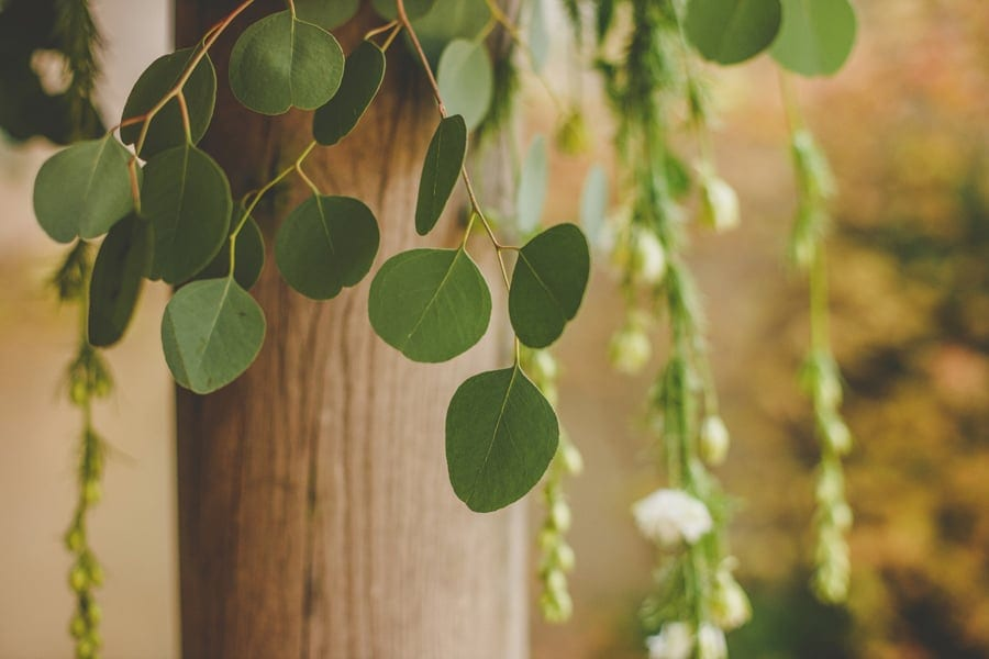 Garden leaves at Matara Centre